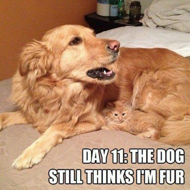 day 11 the dog still thinks i'm fur